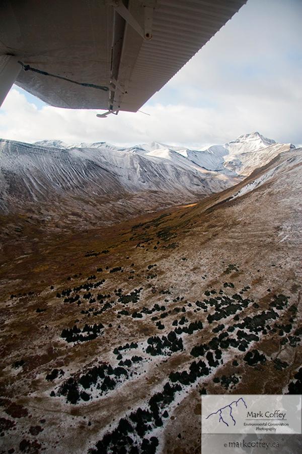 bush plane view